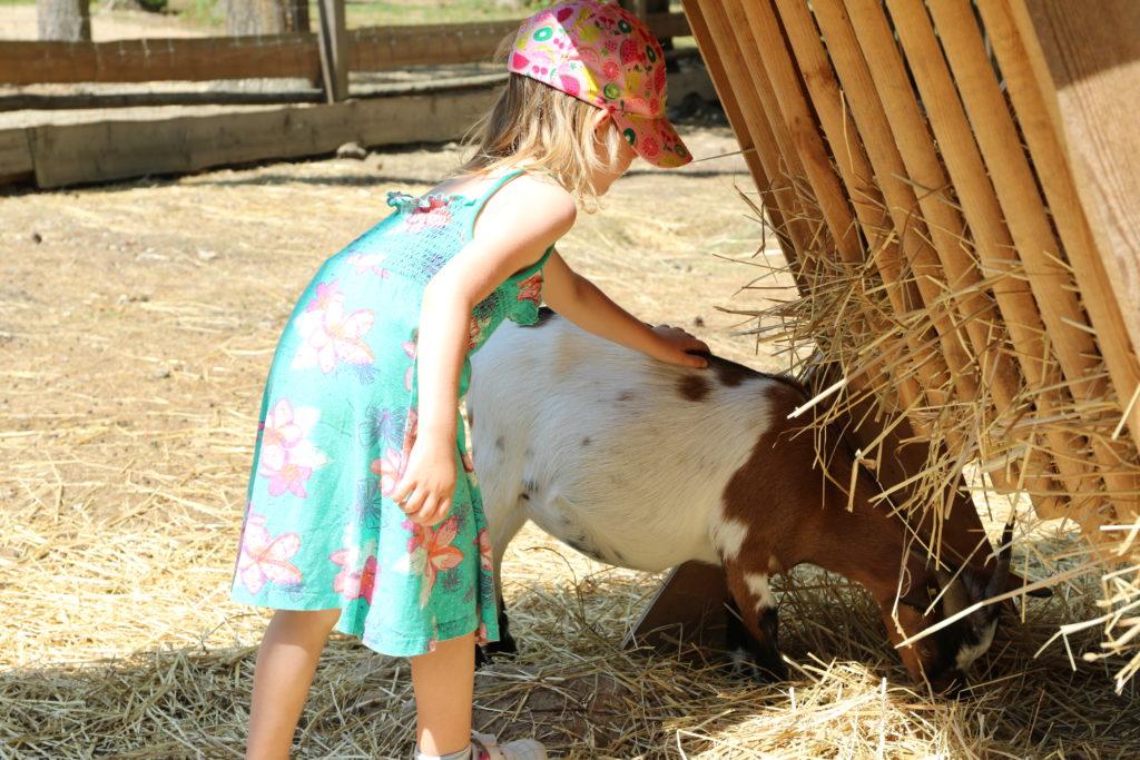 Mädchen streichelt Ziege