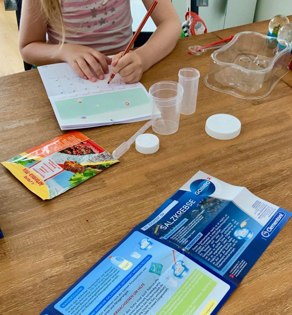 Salzkrebse züchten mit Kindern